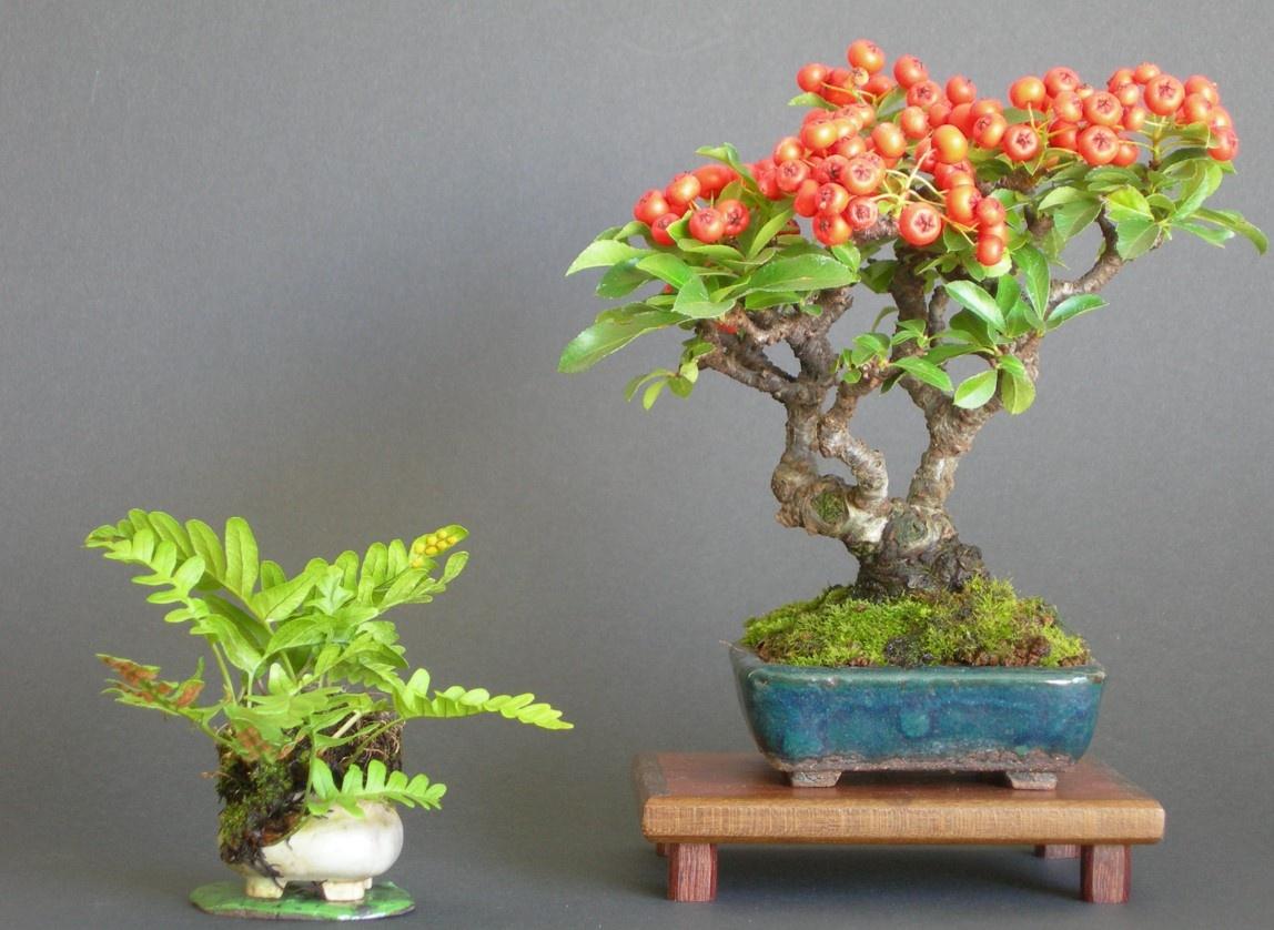Зимние сезонные работы с бонсай (часть 1)