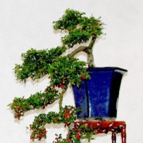 Kengai_bonsai-33