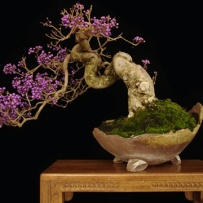 Kengai_bonsai-24