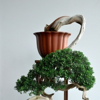 Kengai_bonsai-3
