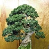 Chokkan_bonsai-19
